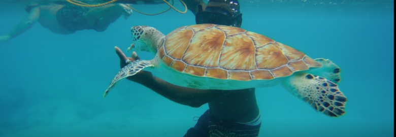 Bliss Boat #1 Snorkeling Tours & The Barbados Holiday Planner